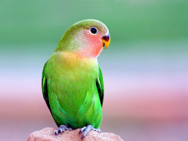 parrot 1   Private AO Bareback Sex Kontakte